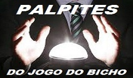 palpites do jogo do bicho