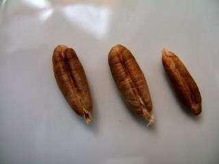 لا ترمى نواة التمر بعد الآن !! .. اعرف لماذا - بذرة بذور - seed seeds