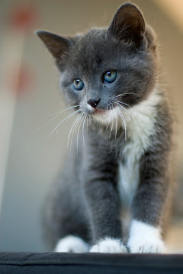 Muffin // Our new kitten by Merlijn Hoek from flickr (CC-NC-ND)