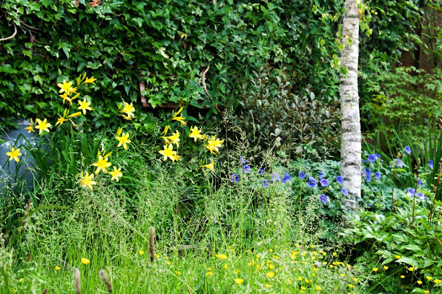 day lilies and geraniums in garden
