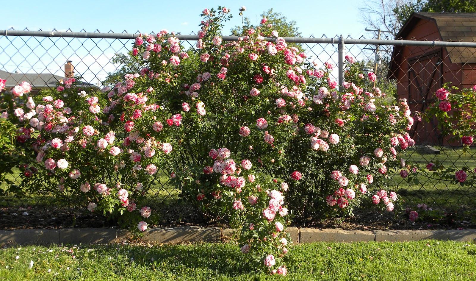 Red Dirt Roses: April 2012
