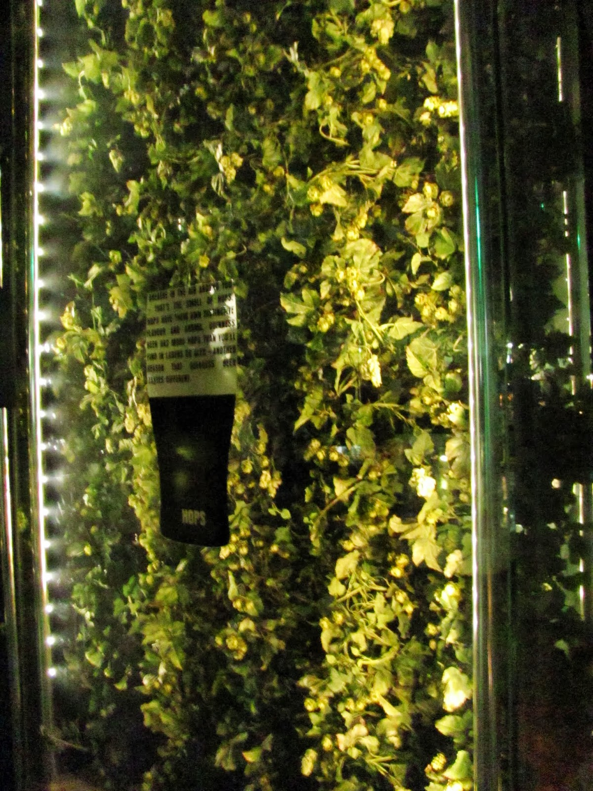 Hops are grown for display at Guinness Storehouse, Dublin, Ireland