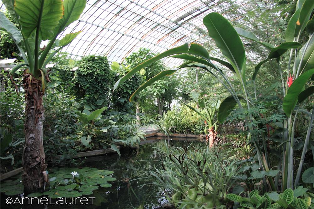 Paris le jardin des serres d 39 auteuil le palmarium for Le jardin des serres d auteuil