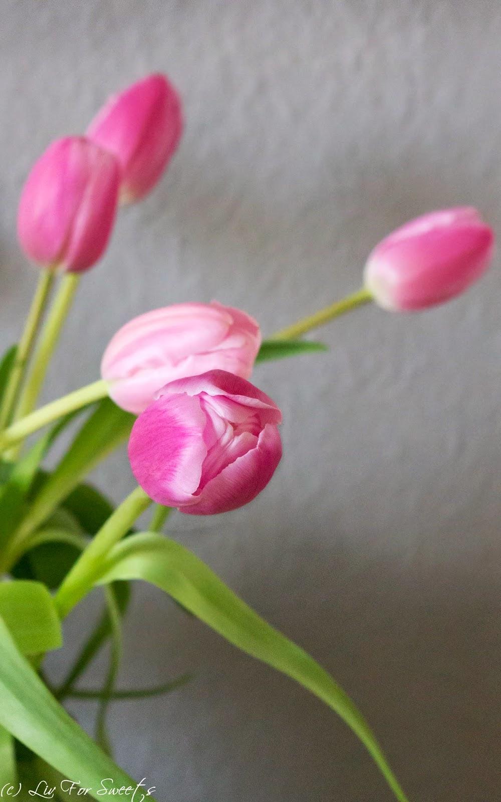 Frühling, Tulpen, Pink, Grün