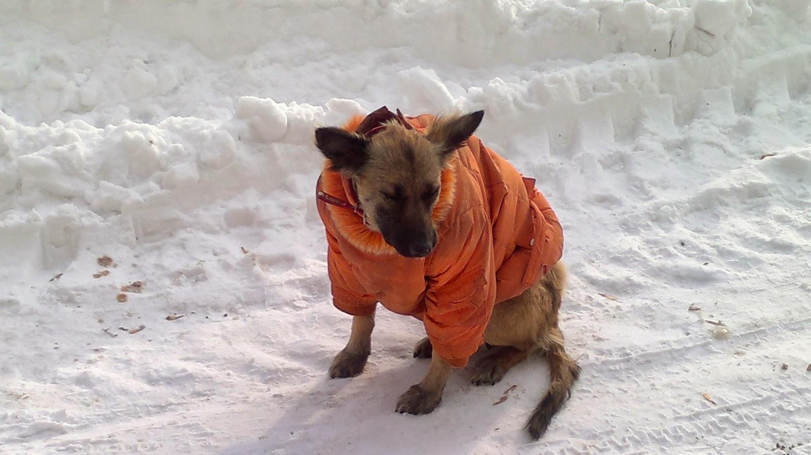 Животным холодно