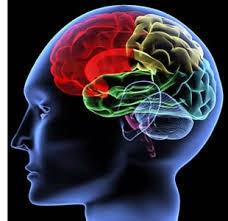 vitamin untuk kuat ingatan