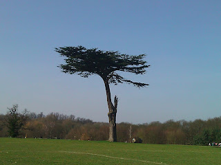Lone Tree in British Park - own image