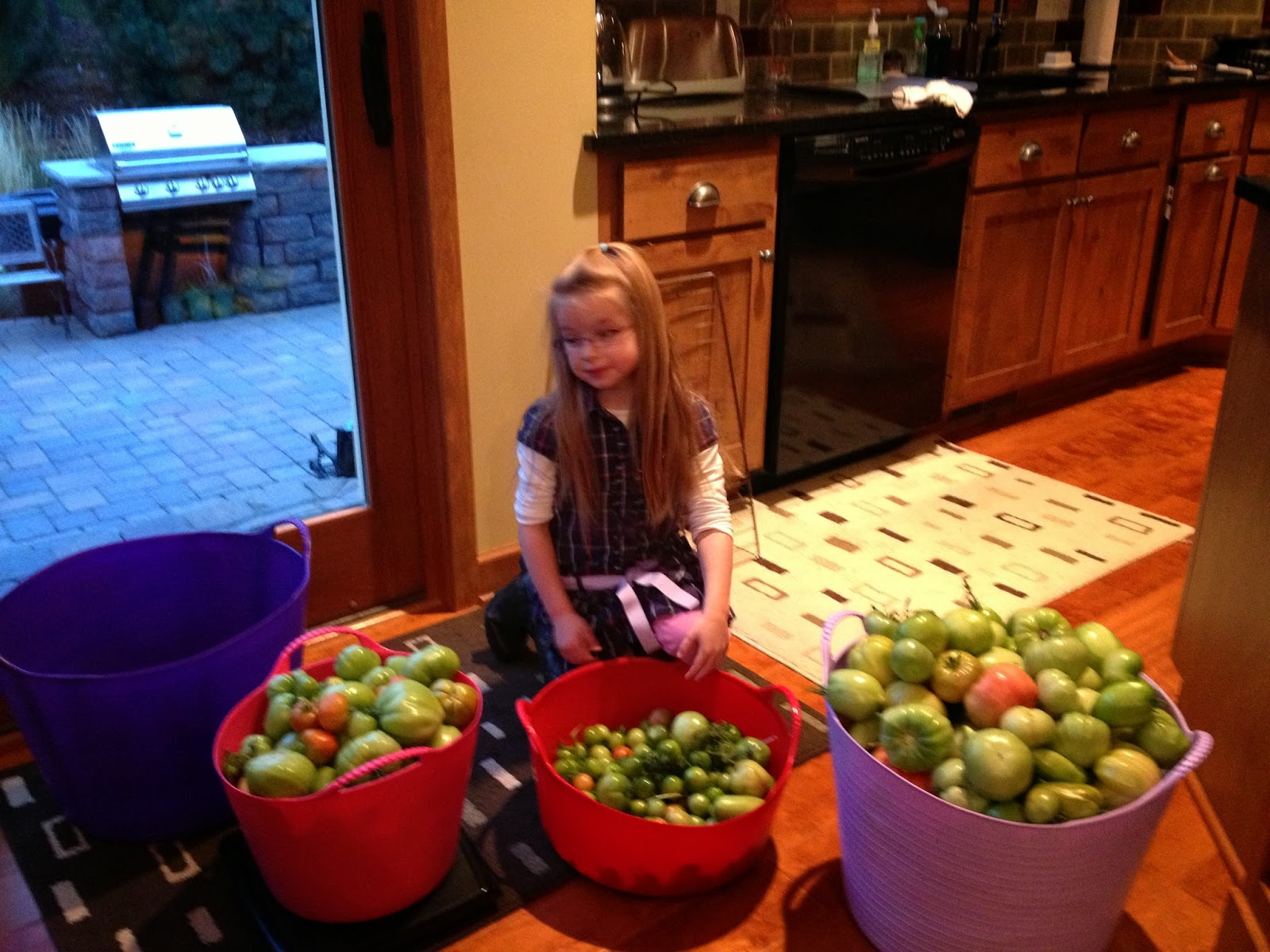 78 pounds of unripe tomatoes for canning