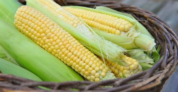 jagung kuning muda
