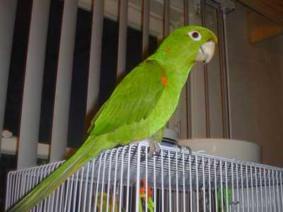 hello friends green parrot