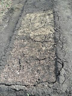 Почва после схода снега
