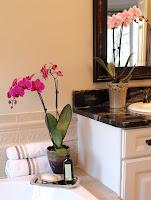 Шест важни правила при отглеждането на Орхидеи
