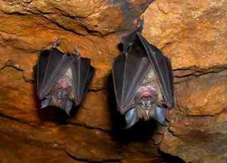 Murciélagos en su cueva