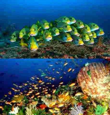 Spesies-Spesies Bawah Laut Raja Ampat Yang Menakjubkan