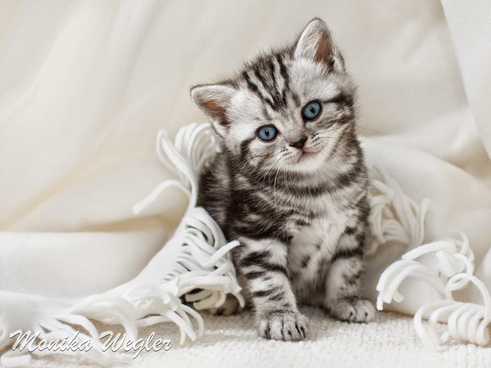 Thader tendencias mascotas para ni os y mayores el gato - El gato en casa ...