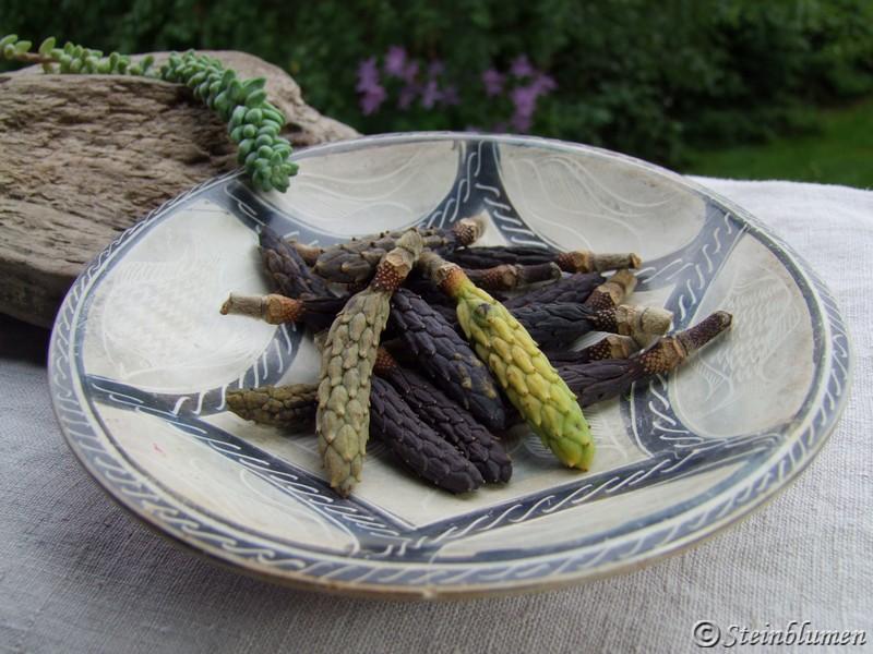 Dekoschale mit Magnolienfrüchten