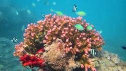 sfondi mare e pesci 14