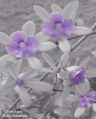 maravilhosas flores do campo