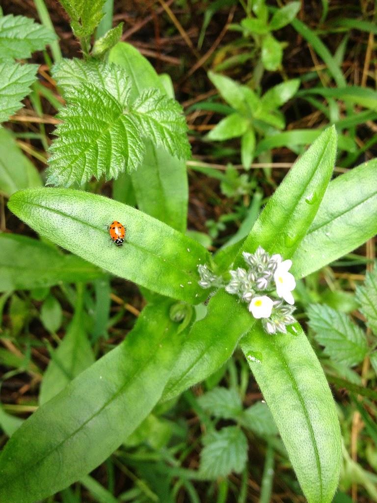 Ladybug Trail, Redwood Regional Park, Oakland, California by Rachel Medanic