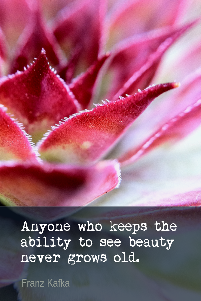 visual quote - image quotation for YOUTHFULNESS - Anyone who keeps the ability to see beauty never grows old. - Franz Kafka