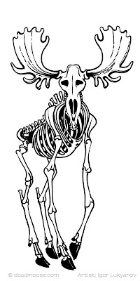 moose skeleton