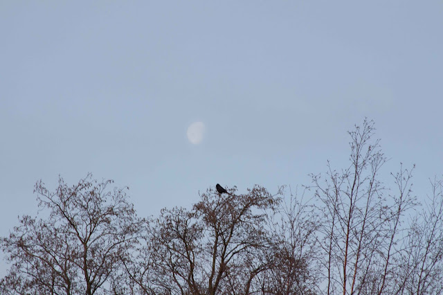 morning sky with bare trees and a bird
