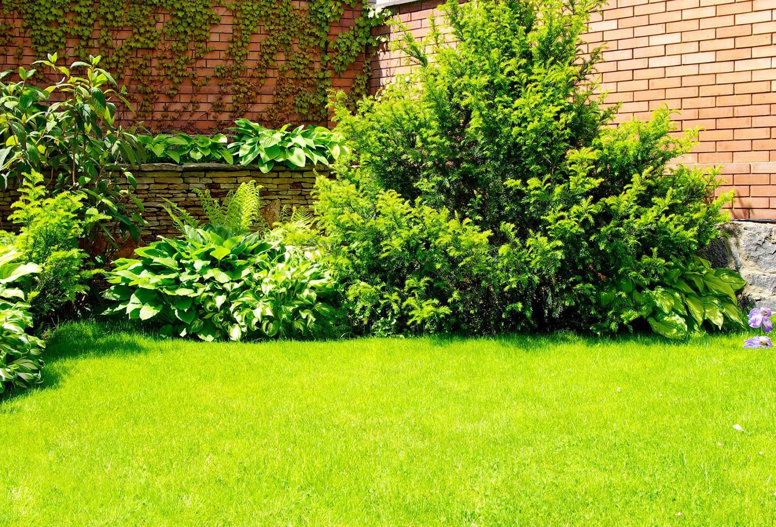 Banco de im genes 9 fotos de jardines dise o exterior plantas y flores - Plantas de jardin exterior ...