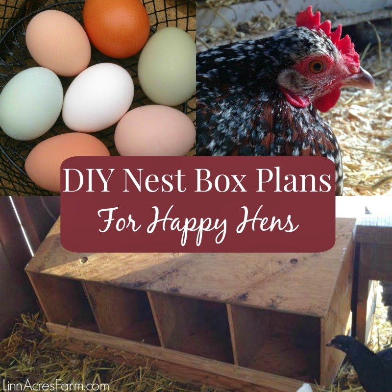 how to build best nesting boxes for laying hens