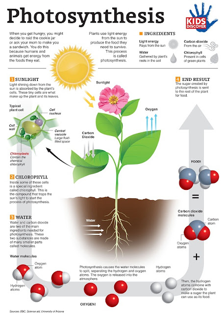 Fotosintesis : Faktor-Faktor Yang Diperlukan dan Kepentingannya