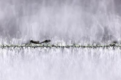 Az Év Természetfotója, Az Év Természetfotósa, Canon, Naturart, természetfotó,
