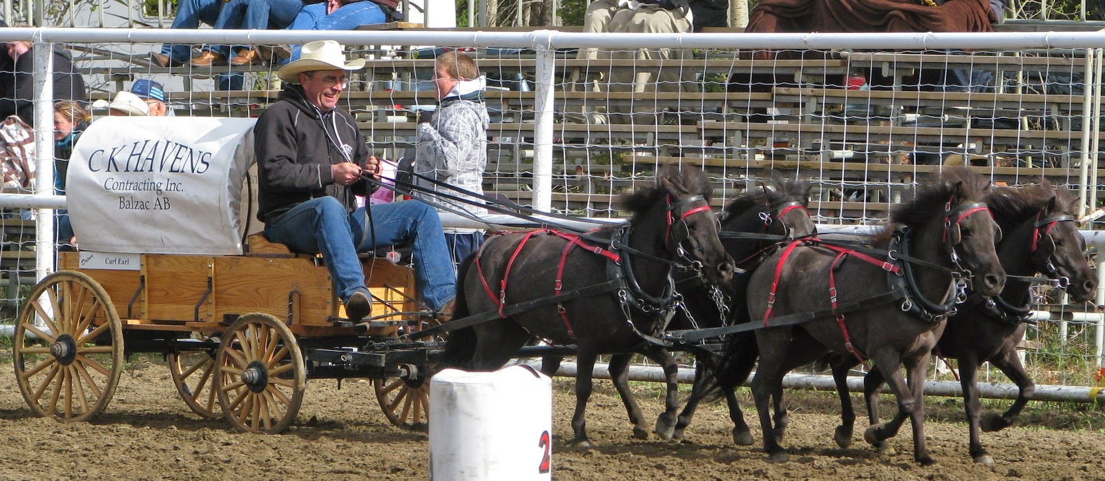 Animals, Animals Race, Chuck Wagon Championships, Chuckwagon Race, Cowboys, Horse Race, Miniature Horses, Oklahoma, Race, Sports, World Miniature Championships,