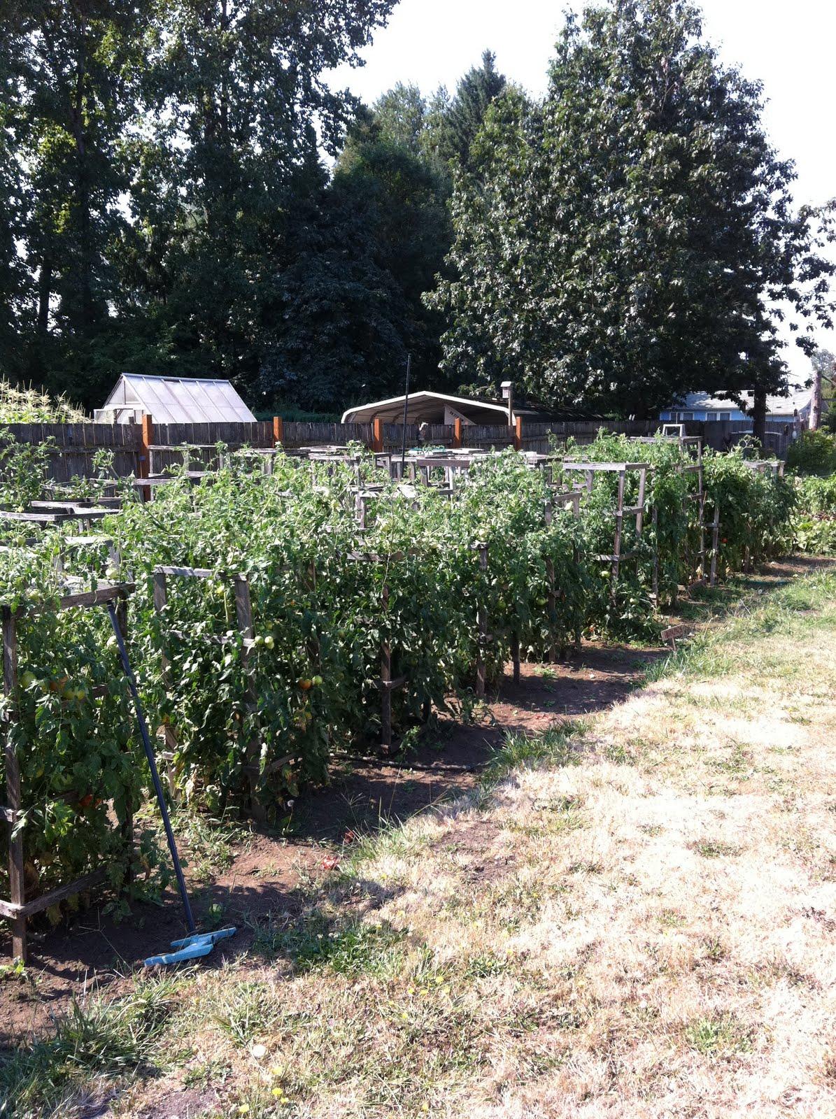 Craigslist Charleston Farm And Garden