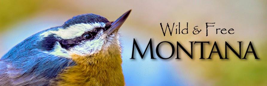 Wild and Free Montana
