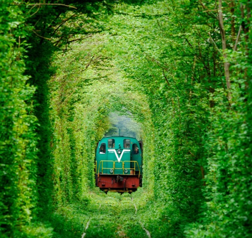 Green Man Tunnel http://bayourenaissanceman.blogspot.com/2012/10/a-tunnel-of-love-complete-with.html