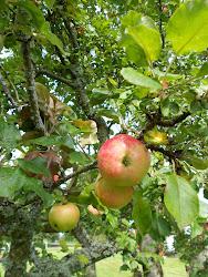 Kaffe under äppelträden