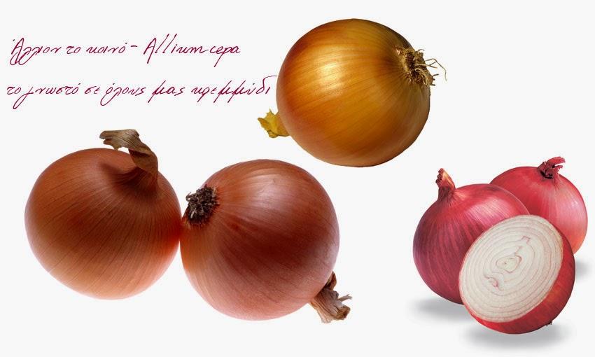 γνωρίζουμε πως το κρεμμύδι είναι ένα εργοστάσιο παραγωγής θρεπτικών ουσιών:
