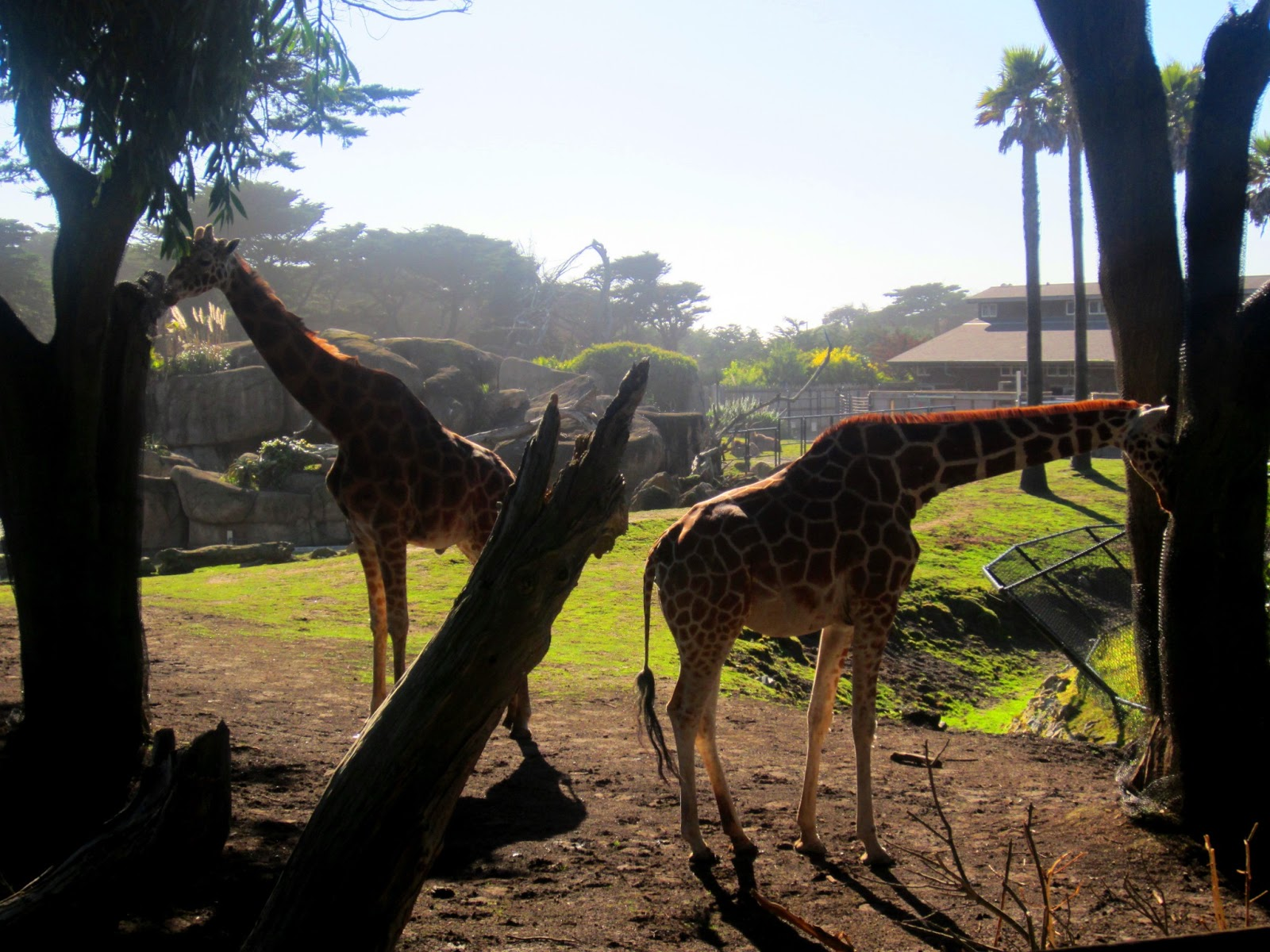 mit liv som Givskud Zoo rabat