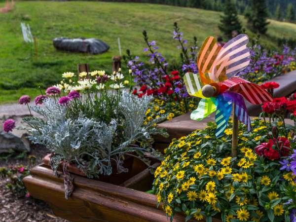 Como Preparar Tu Jardin Para Tormentas Trucos De Bricolaje - Arbustos-para-vallas