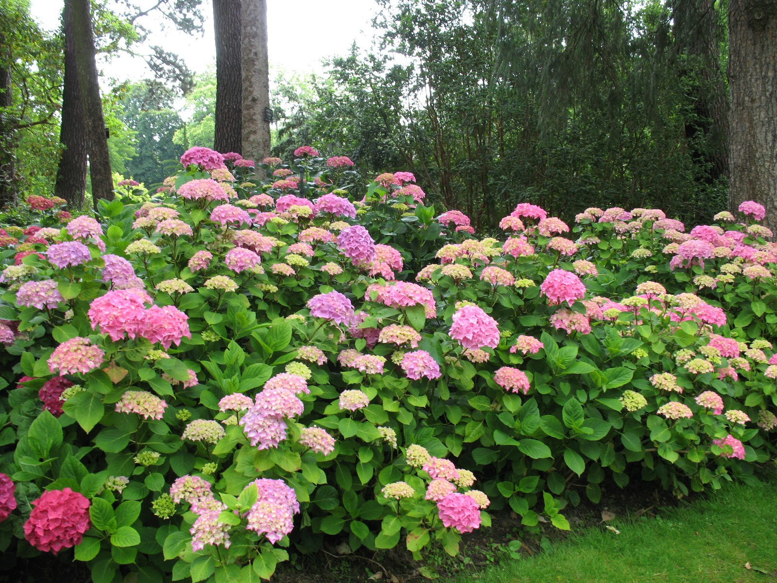 Roses du jardin ch neland jardin des plantes de nantes for Plantes fleuries de jardin