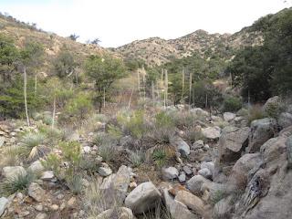 Montosa Canyon habitat