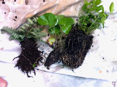 como hacer un jardin colgante kokedama