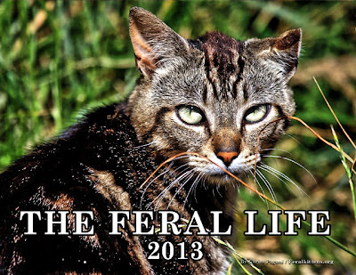 The Feral Life 2013 photo cat calendar cover