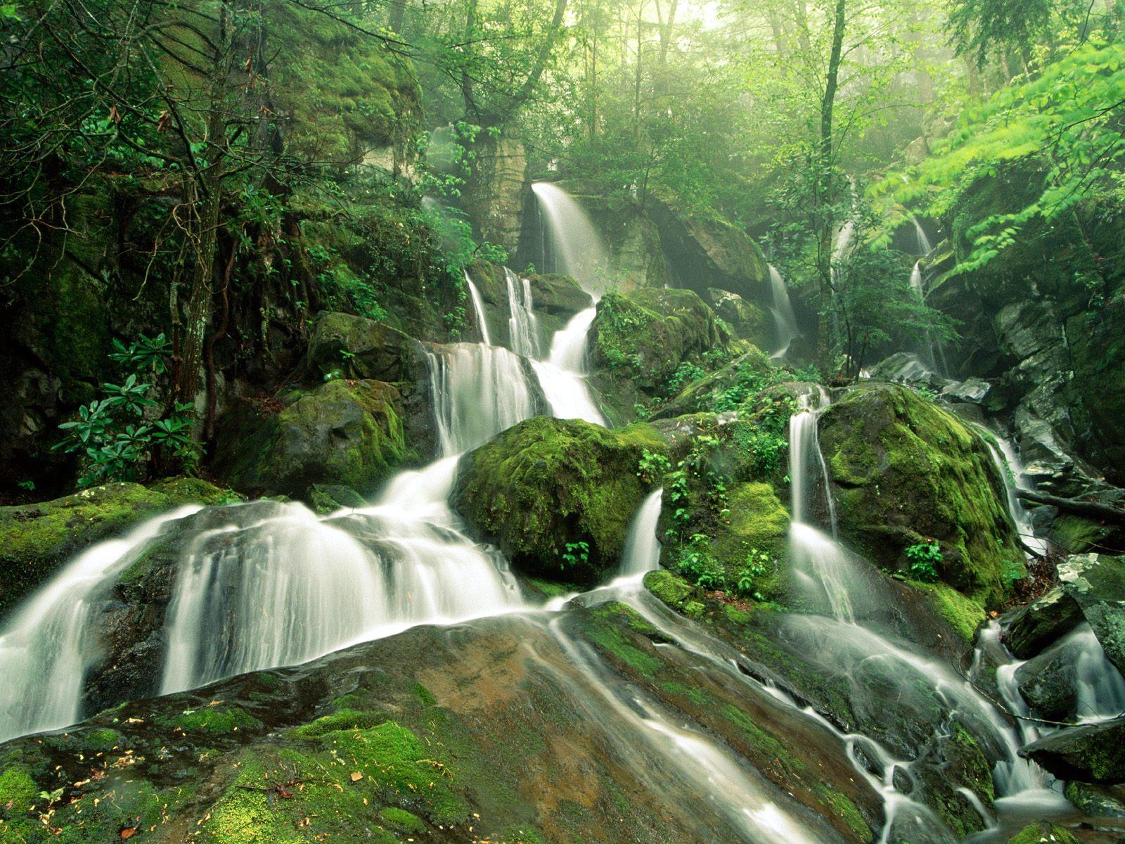 http://4.bp.blogspot.com/-DVV28ZPSQPE/T82Dj8VJ9VI/AAAAAAAAAP0/dyHxa8rJSZQ/s1600/ForestFall.jpg