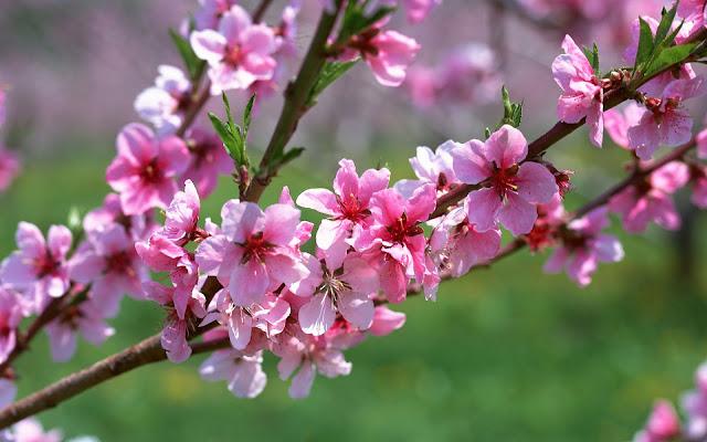 Cảnh đẹp hình nền về mùa xuân