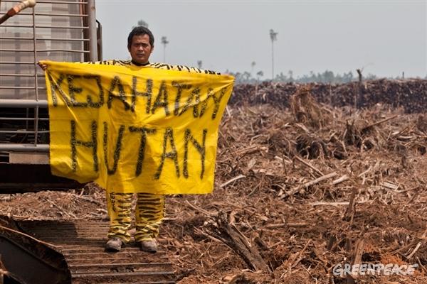 Greenpeace Sorot Pertemuan RSPO di Singapura