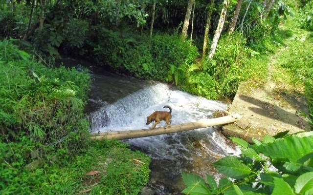 jembatan kecil dari bambu