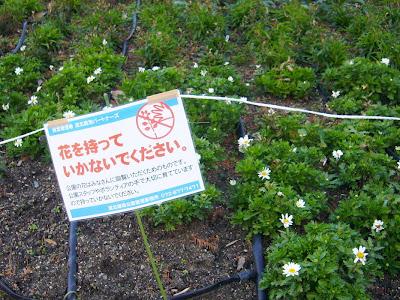 大阪府・深北緑地 花壇