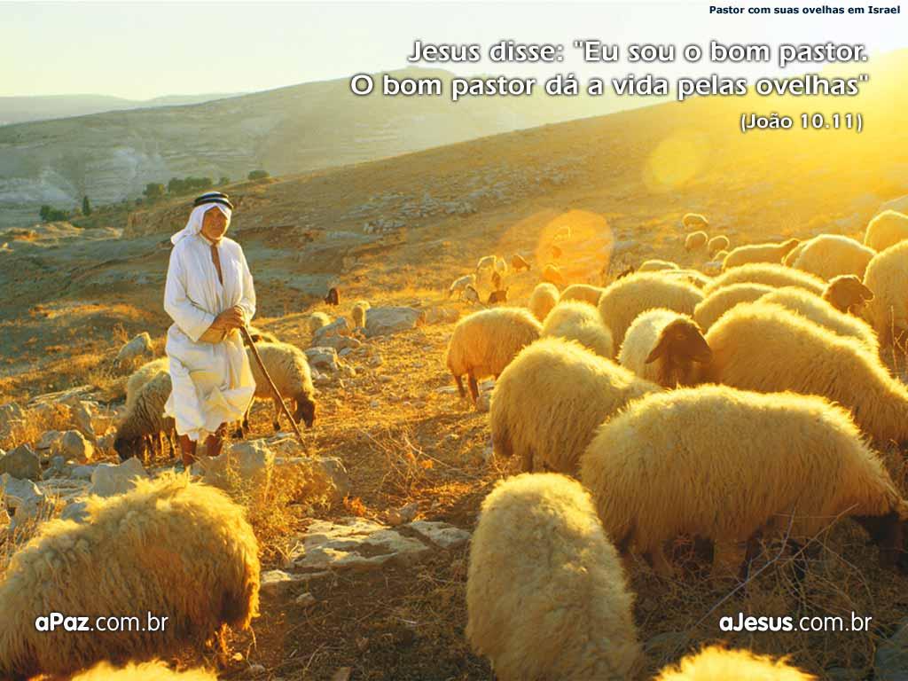 Pastoreando Ovelhas....