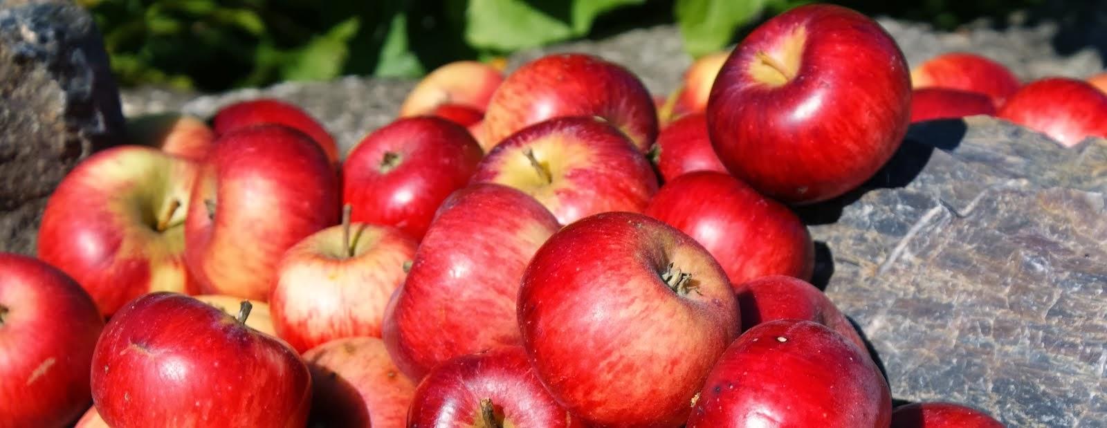 expatova's apples